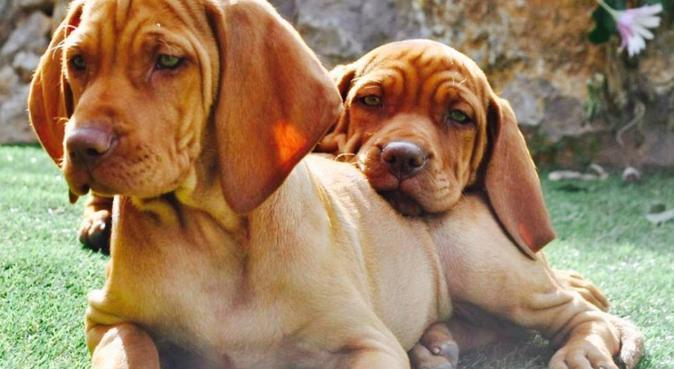 Amour, Qualité de temps et Space : happy dogs ❤️, dog sitter à Le Biot