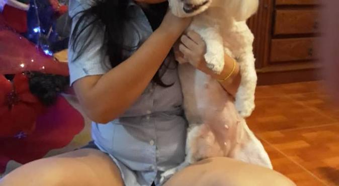 Cuidadora de perros Amigable y responsable., canguro en Reus, España