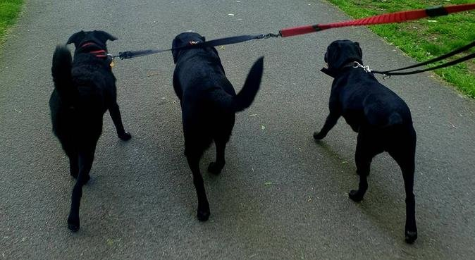 Home from home for your dog, dog sitter in Chelmsford