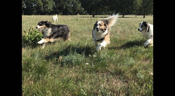 Des vacances rêvées pour votre toutou !, dog sitter à Toulouse
