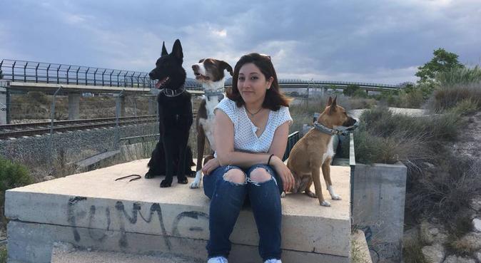 Paseo de perros de todas las edades, canguro en Alicante