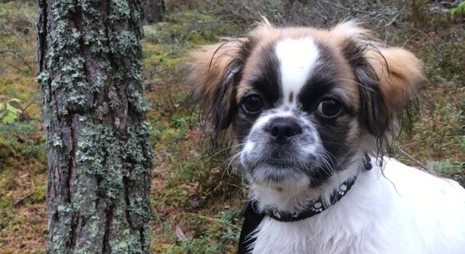 Hundpassning i hemmiljö med underbar natur omkring, hundvakt nära Norrköping