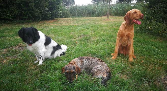 Hondenliefhebbende oppas in Alphen aan den Rijn, hondenoppas in Alphen Aan Den Rijn