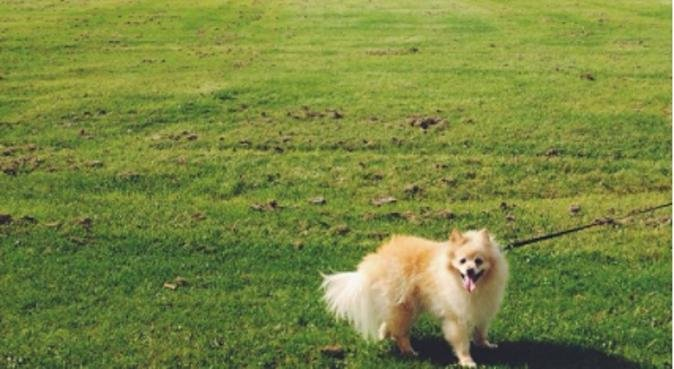 Dog Walking in Liverpool City Centre, dog sitter in Liverpool