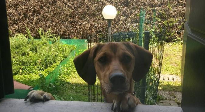 Amore e coccole come fosse a casa sua, dog sitter a Padova