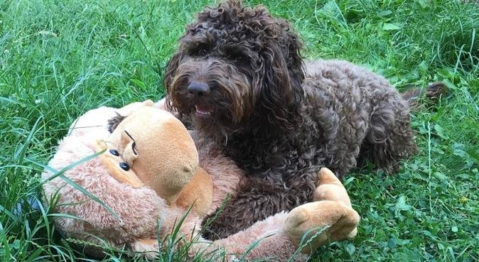 Spend the Day with Dexter, dog sitter in Canterbury