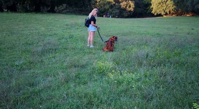 Mill Hill dogsitter, dog sitter in London