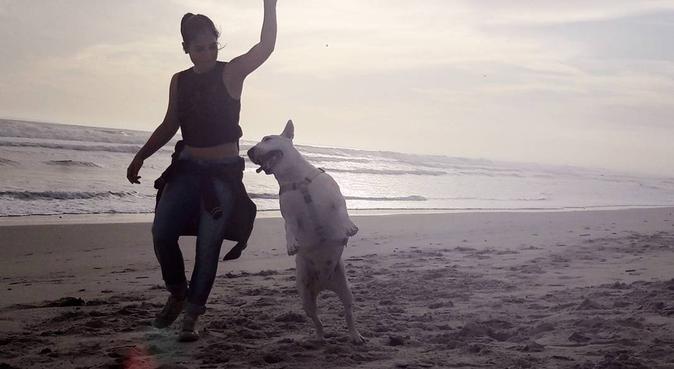 Las vacaciones soñadas de tu perro, canguro en Alicante