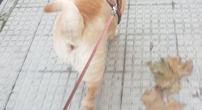 Él merece un buen paseo, te lo agradecerá, dog sitter in Rojales, España