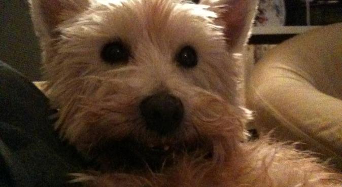 Votre chien sera chouchouté!, dog sitter à Paris