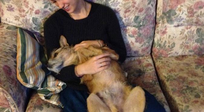 Coccole, giochi all'aria aperta e passeggiate :), dog sitter a Pisa