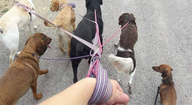 Hundinstruktör under utbildning, hundvakt nära Skärblacka