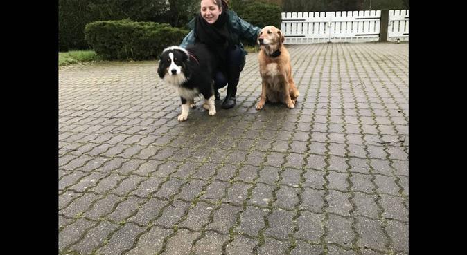 Garde de toutous !, dog sitter à Chantepie