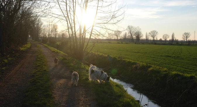 Lunghe passeggiate in compagnia, dog sitter a Bologna