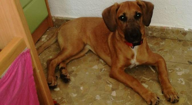 Tu perro estará como en casa, canguro en Madroñera