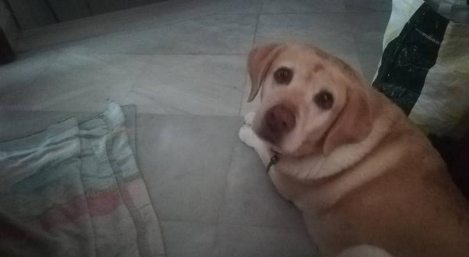 Cuidadora de perros, canguro en Mairena del Aljarafe