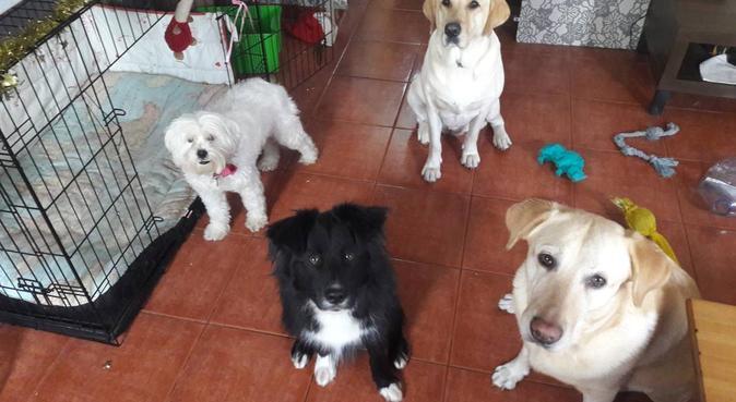 Los amigos de Kira, canguro en Santa Cruz De Tenerife