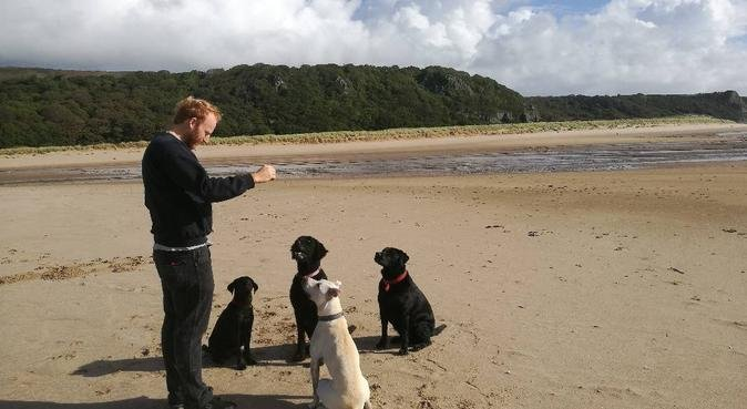 Harry and Rosie are excited to meet new friends!, dog sitter in Swansea