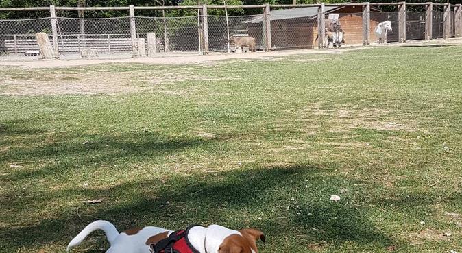 Coccole e tante passeggiate per i vostri amici, dog sitter a Parma