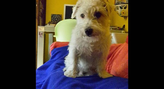 Amore, professionalità, pazienza, esperienza., dog sitter a Verona