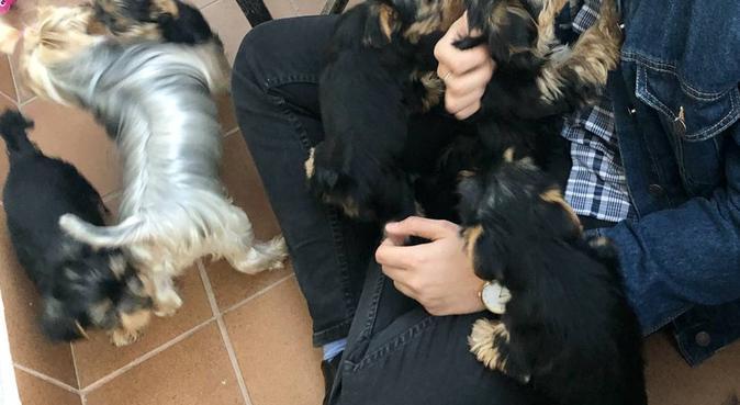 Cuidamos tu mascota en Terrassa (centro), canguro en Barcelona
