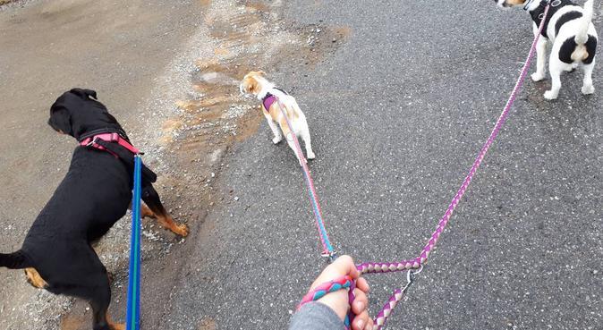 Hvem elsker ikke hunder?, hundepassere i Nordkisa