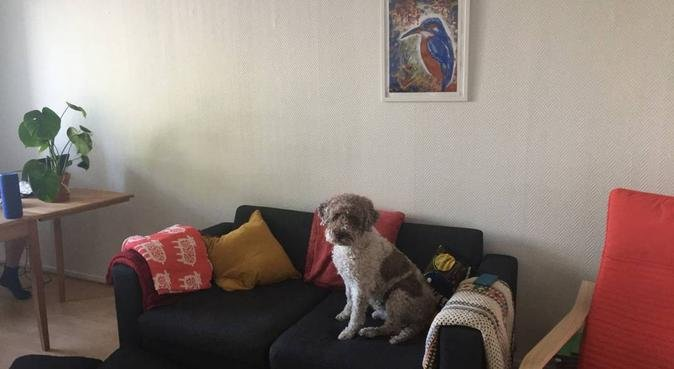 Hundkompis sökes i Lund, hundvakt nära Lund