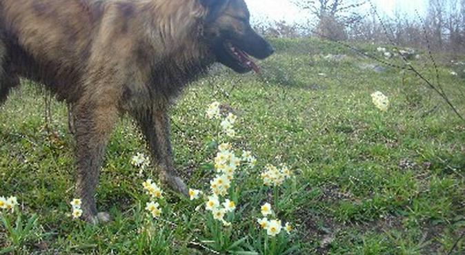 Amante degli animali e delle passeggiate, dog sitter a la spezia