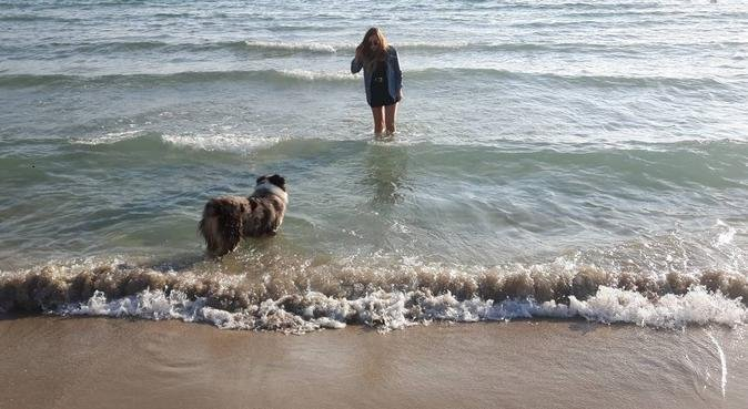 Une 2eme famille d amour et de repos, dog sitter à Meyreuil