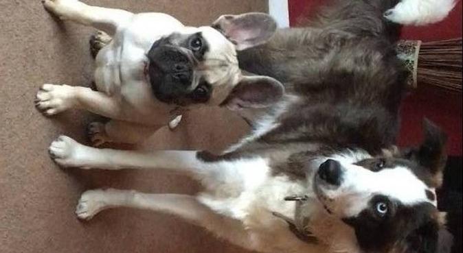 Doggie heaven, dog sitter in Ipswich