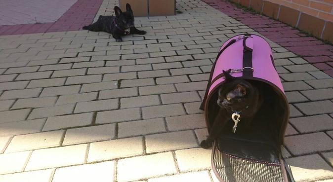 Un hogar Doglover, canguro en Navalcarnero