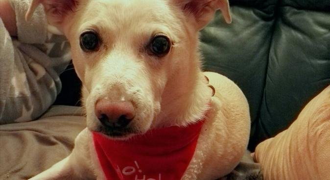 Ein ausgelasteter Hund ist ein glücklicher Hund, Hundesitter in Gera, Deutschland