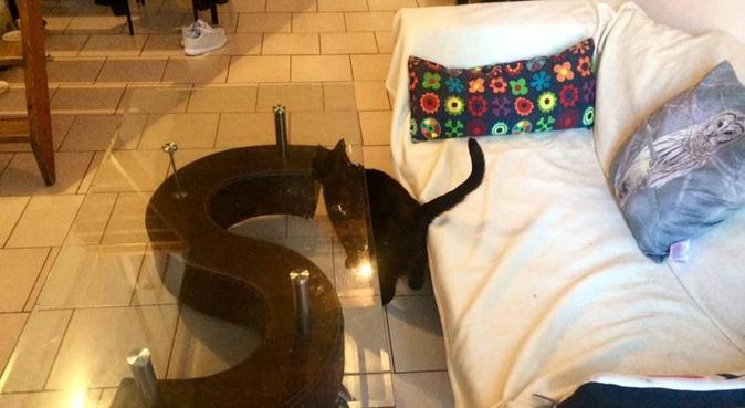 La Dogsitter officielle de Montpellier, dog sitter à Montpellier