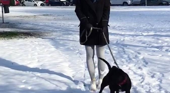 Lunghe passeggiate e giochi divertenti, dog sitter a Bologna, BO, Italia