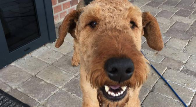 Dein bester Freund in guten Händen - Berlin, Hundesitter in Berlin