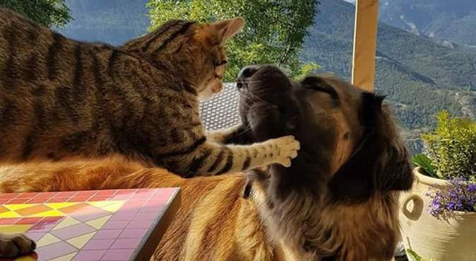 Mamie pour chien, dog sitter à Trappes (78190)