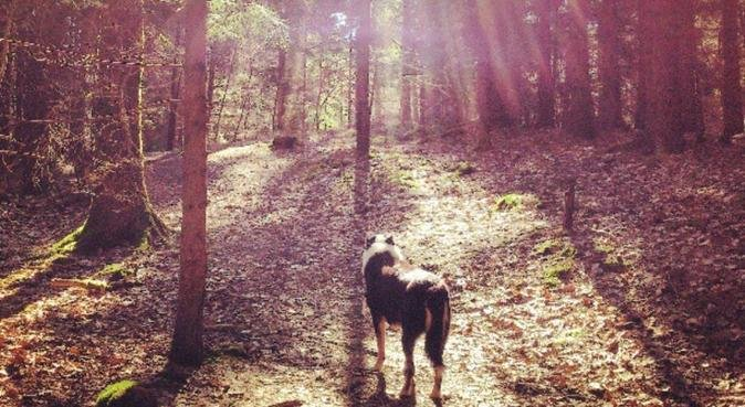 Aktiv hundpassning i östra Göteborg, hundvakt nära Göteborg