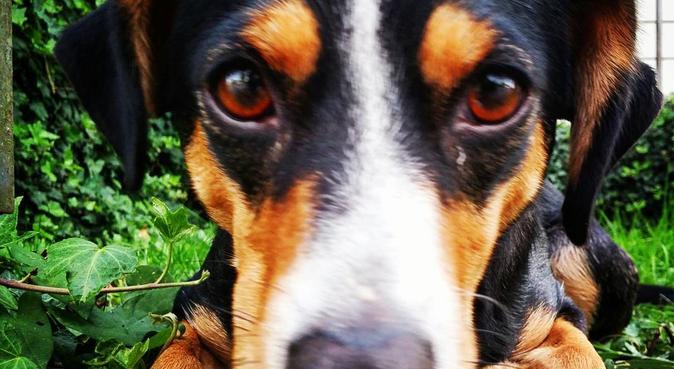 Passeggiate e tante coccole, dog sitter a San Martino Buon Albergo