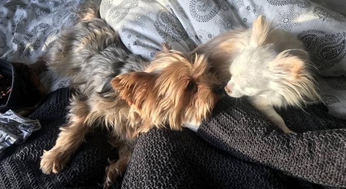 Kärleksfull hundälskare i Majorna, hundvakt nära Göteborg, Sverige