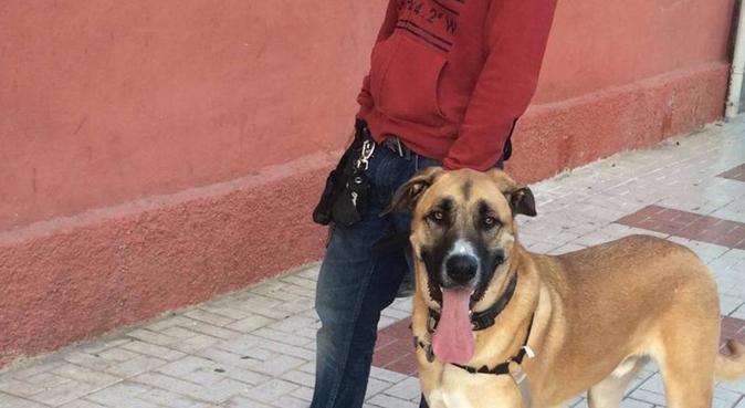 respetuoso con sus mascotas,responsable y serio., canguro en Málaga