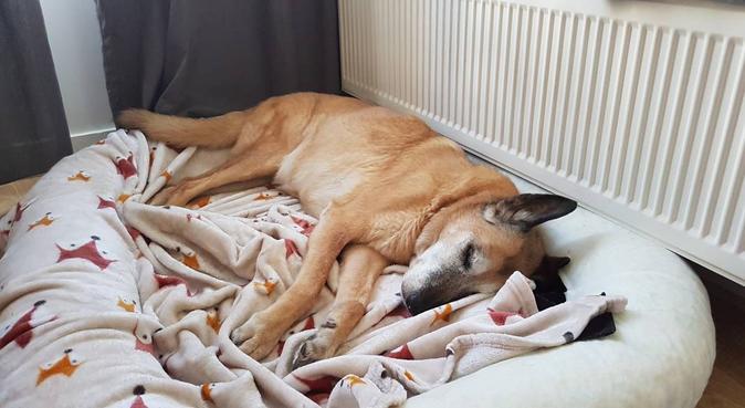 Votre compagnon comme si c'était le mien, dog sitter à Rueil-Malmaison, France