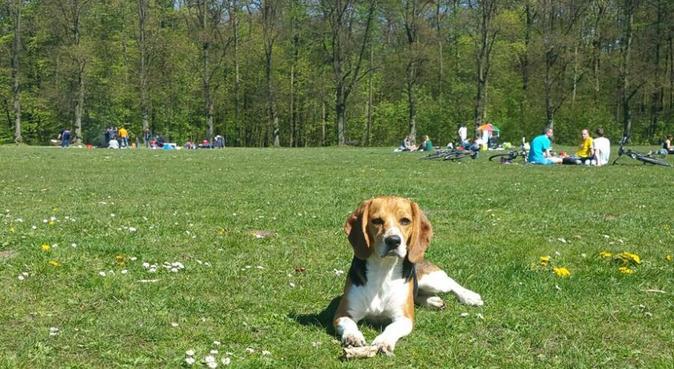 Hundebetreuung mit Abenteuergarantie :-), Hundesitter in Hamburg