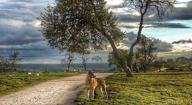 AMAR A LOS ANIMALES ES DESPERTAR EL ALMA, canguro en Tres Cantos, España