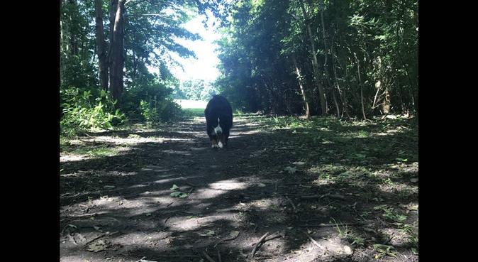 Hundpassning Lomma med mängder kärlek, hundvakt nära Lomma