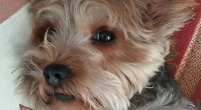 COMPORTEMENTALISTE POUR CHIEN, dog sitter à Marseille