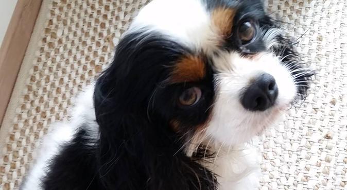 La nouvelle tata de votre chien :), dog sitter à Nantes