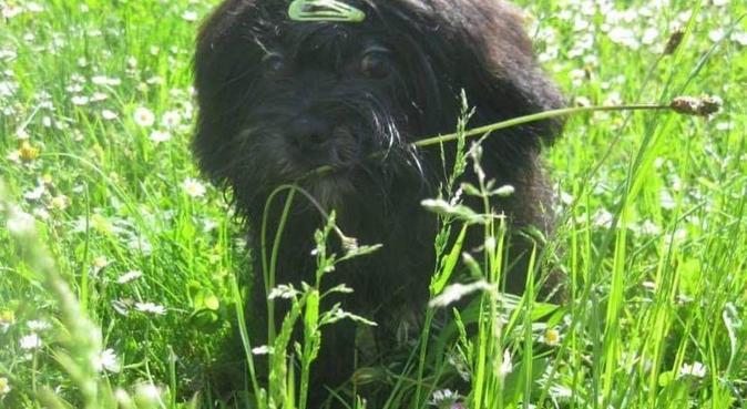 Un séjour détente pour votre toutou, dog sitter à Craponne, France