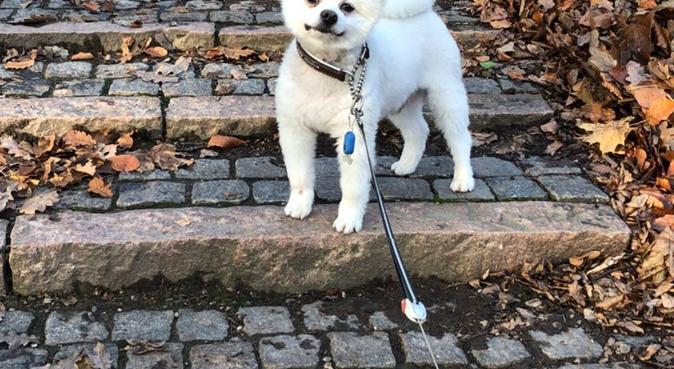 Omtänksam och seriös hundpassare, hundvakt nära Halmstad