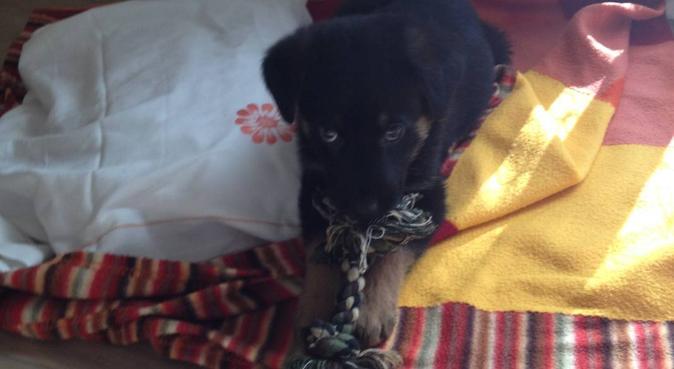 Chi trova un dogsitter trova un tesoro, dog sitter a Napoli, NA, Italia