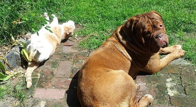 Multi services animaliers., dog sitter à Lille